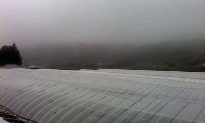 霧のち雨…