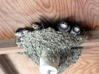 春友で見られる鳥達